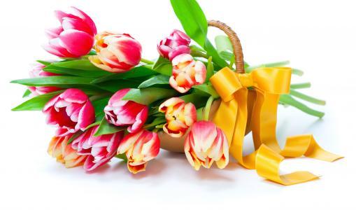 郁金香,花朵,花瓣,春天