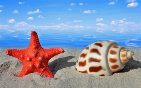 冷静,海,壳,星,沙,天空