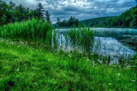 森林,河流,岸边,草地,芦苇,雏菊,树木