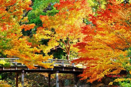 石头,树木,桥梁,公园,金色,阳光明媚