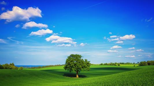 天然,绿色,公园,壁纸
