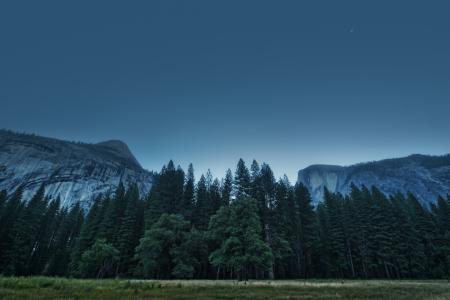 我们,сша,加州,优胜美地山谷,森林