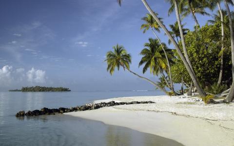 海,石头,棕榈树,岸,热带,水