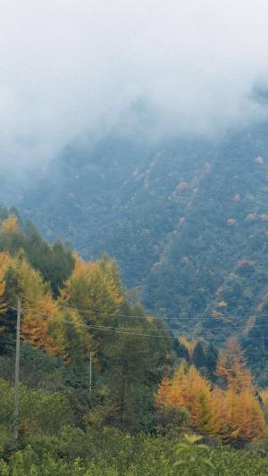 山间清晨雾景