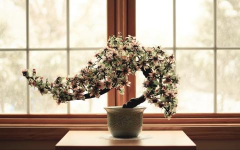 矮小的树苗,花卉,窗口
