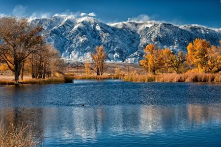 山,湖,秋,树,芦苇