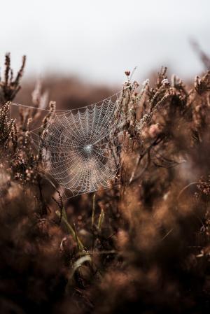 杂草上的蜘蛛网