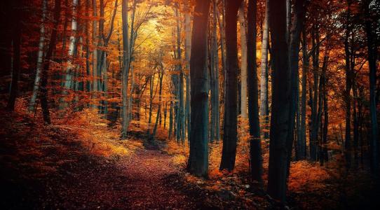 叶子,森林,树木,黄色