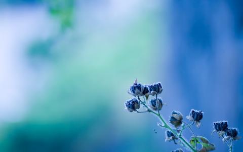 蓝色的花朵,蝴蝶