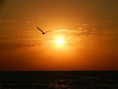 早上,阳光,海水,海鸥