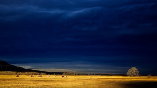 蓝,风暴,云,壁纸