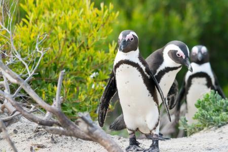 企鹅,鸟,公司