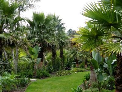 花园,棕榈园,新西兰