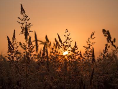 草,日落,草地