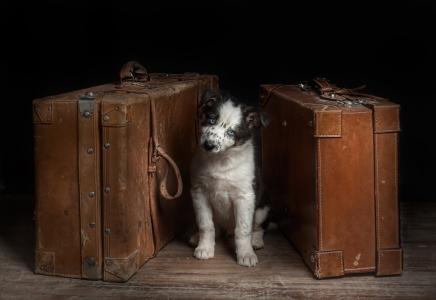 朋友,狗,看,手提箱