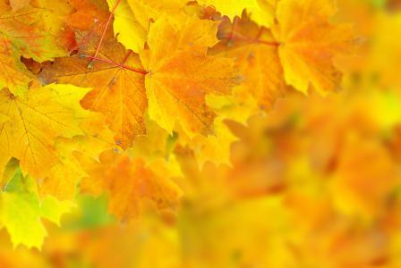 叶子,散景,秋天