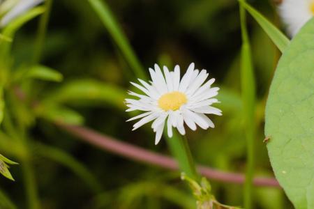 清新迷人的雏菊花