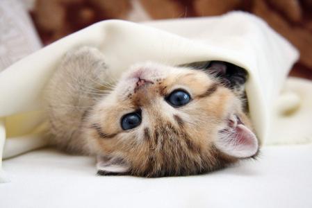小猫,说谎,亲爱的