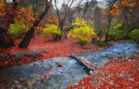 叶子,森林,流,性质,桥,山麓小丘