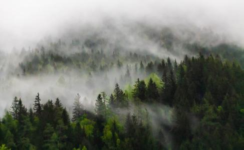 雾气缭绕的森林美景