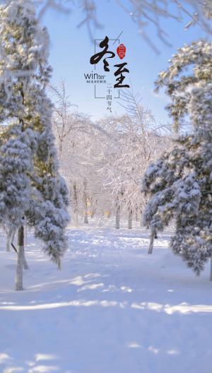 冬至时节树林雪景