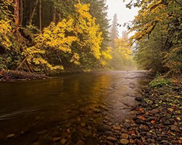 森林,河流,树木,雾,自然,秋季