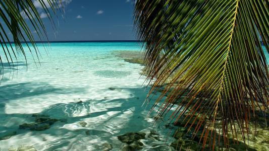 男,环礁,壁纸