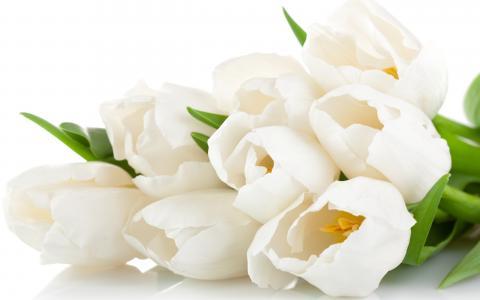 白色,鲜花,花瓣,郁金香,花束,美容,цветы