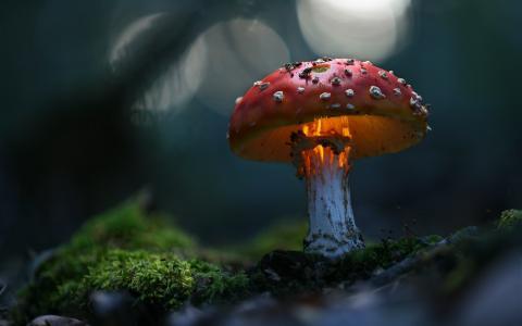 绿色,神奇,宏观,蘑菇