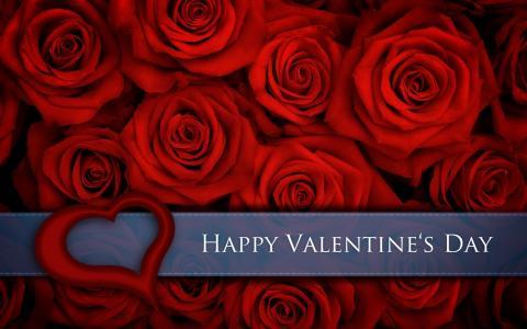 玫瑰,对,情人节,日,壁纸
