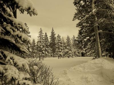 棕褐色,冬天,森林,冬天,雪,性质