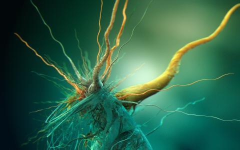 细菌,壁纸