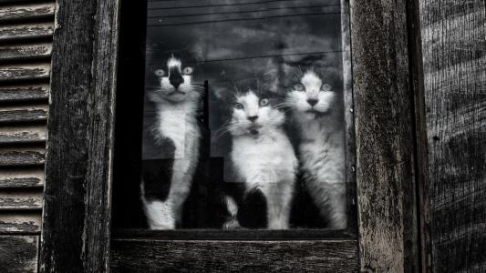 坐,在,窗口,壁纸