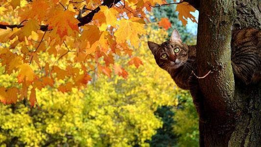 好奇,猫,壁纸