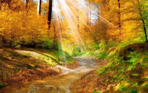 光,结束,森林,壁纸