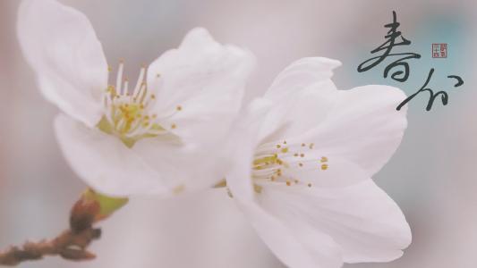 春分时节花朵盛开
