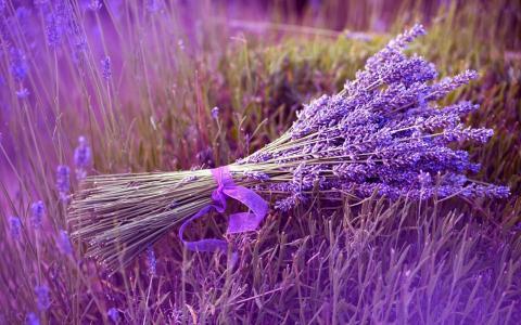 花束,薰衣草,丁香,丝带