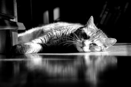 休息,条纹,说谎,猫,猫