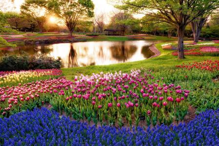 公园,树木,池塘,凉亭,太阳光线,草,绿色,鲜花,郁金香,丰富多彩,风信子