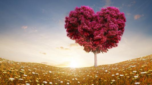 爱,树,壁纸
