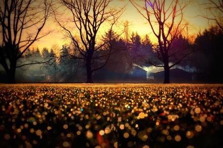 秋天,地平线,房屋,树木,射线