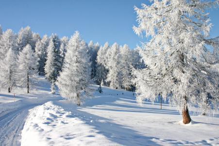 树,冬天,景观,性质,雪