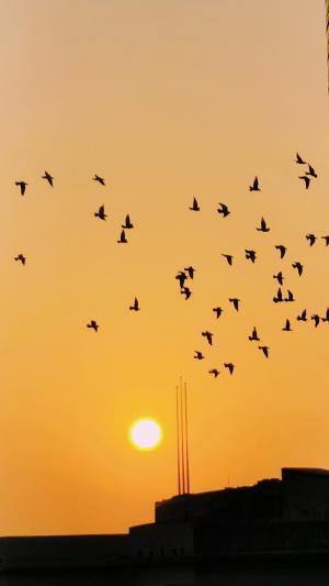 落日黄昏下的唯美风景