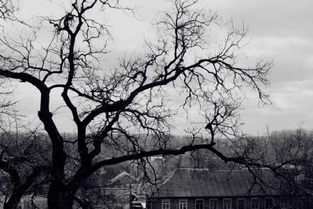 树,房子,ch.b.