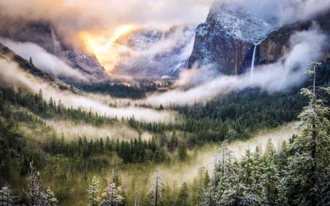 雾,风景,森林,山,自然