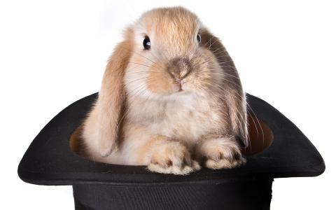 兔子,帽子