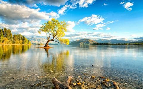 新西兰,湖,岸,景观