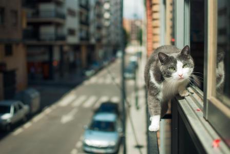 城市,视图,街道,猫