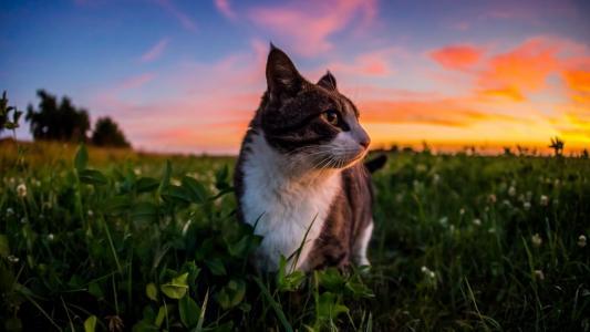 小,猫,并且,日落,壁纸
