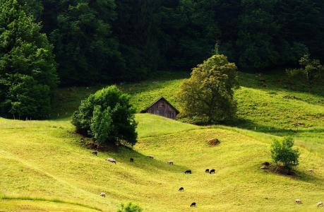 丘陵,树木,牧场,景观